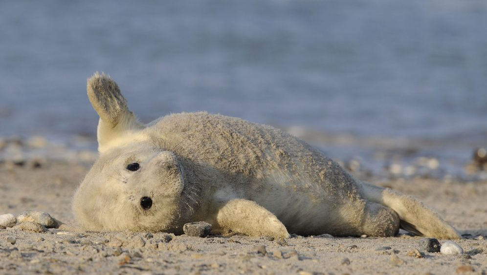 Photo Gallery: Seal Pups Missing after Big Storm