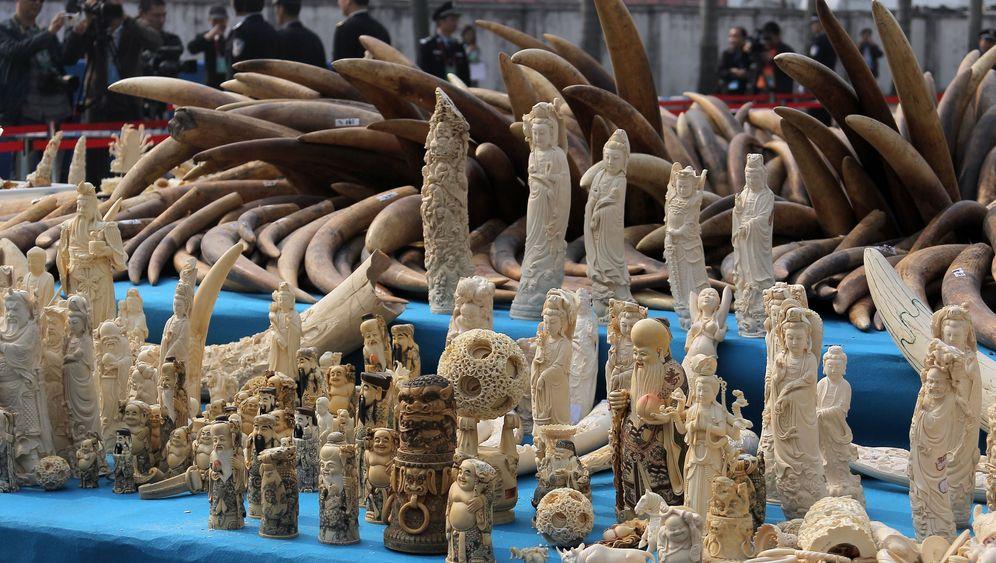 Fotostrecke: Pulverisiertes Elfenbein