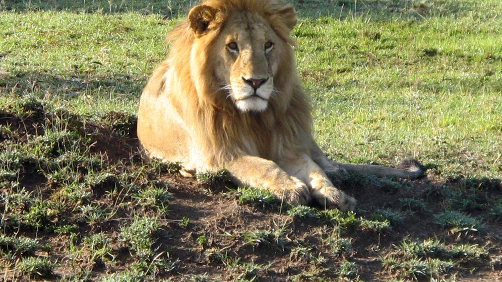 Masai Mara: Kenias berühmtester Nationalpark