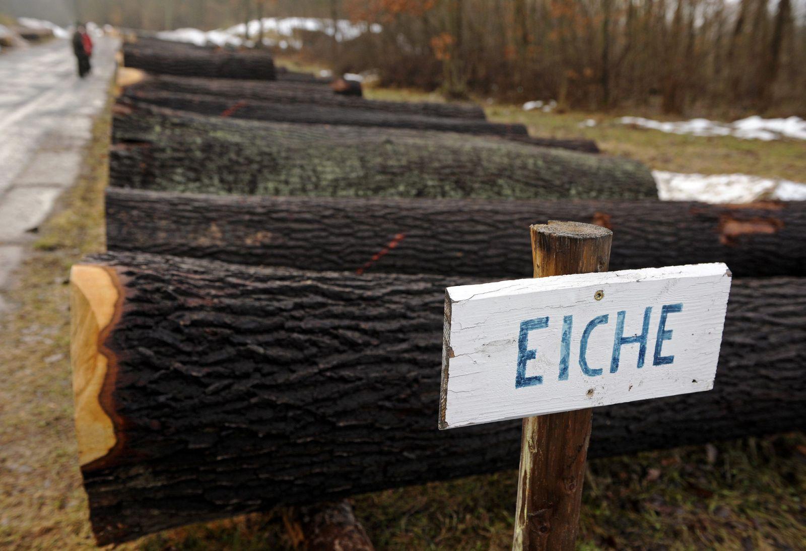 NICHT VERWENDEN Eichen / Wald / Holz