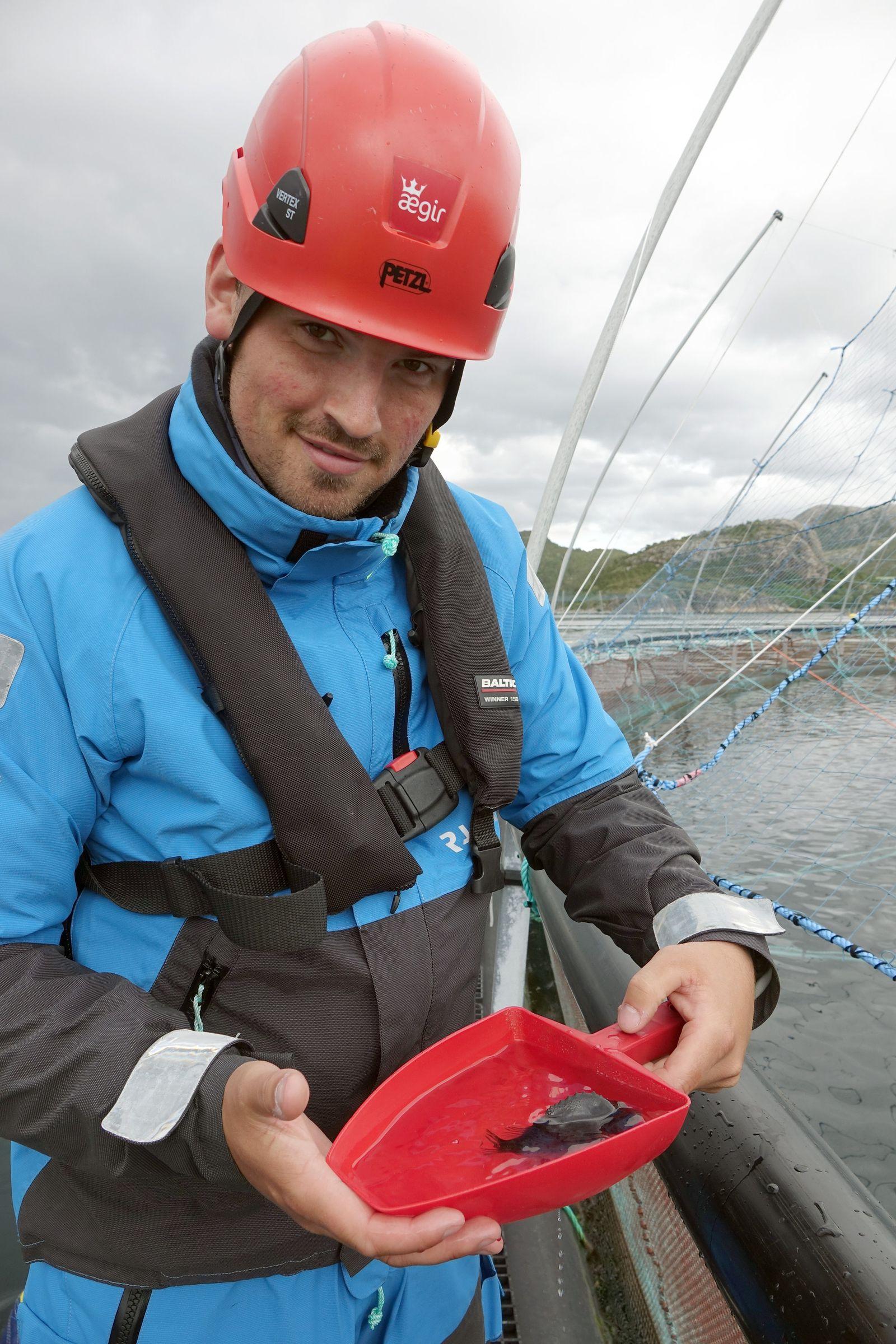 Lachse in Norwegen