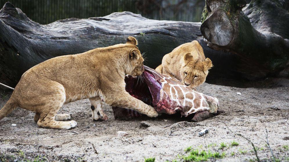 Vier tote Löwen: Leben und Sterben in Kopenhagen