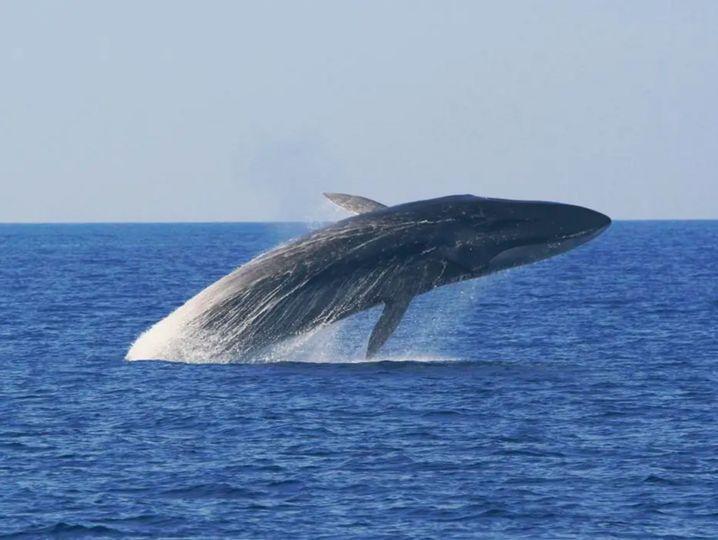 Da springt ein Wal aus dem Meer