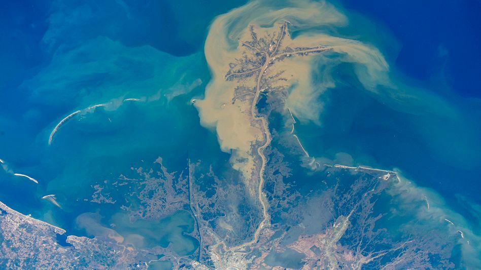 Der gewaltige Mississippi führt Nährstoffe und Sediment mit sich. Dort, wo er in den Golf von Mexiko mündet, ist das Wasser braun und trüb.