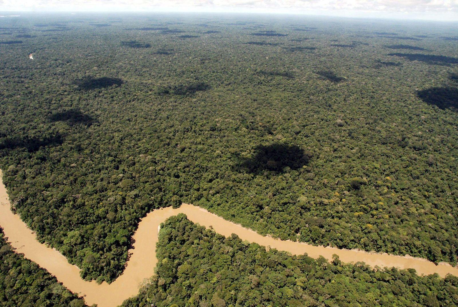 Nationalpark Yasuni Ecuador