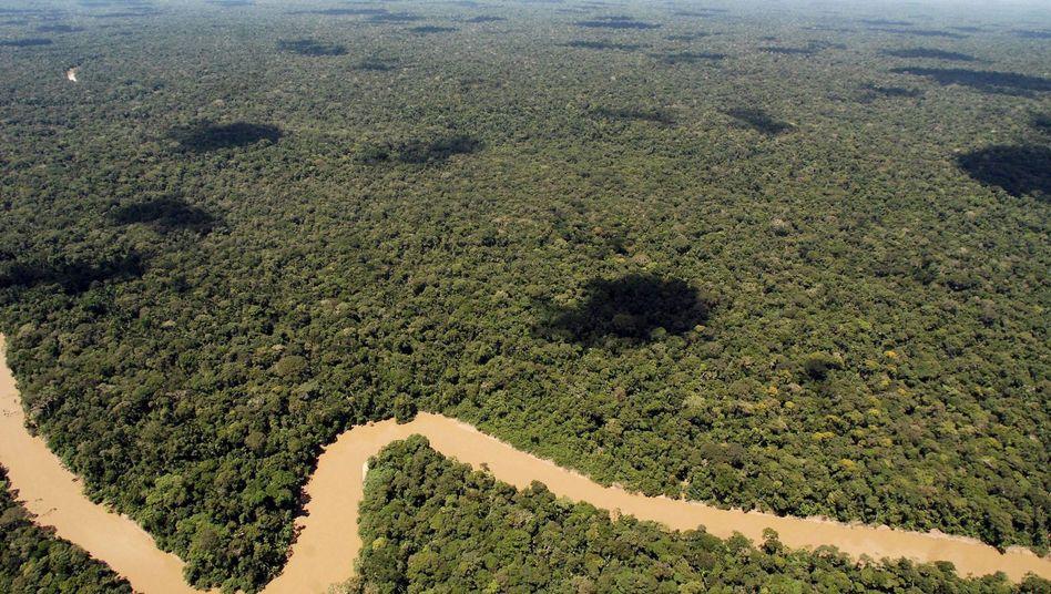 Yasuní-Nationalpark: Lizenz für 17 Hektar