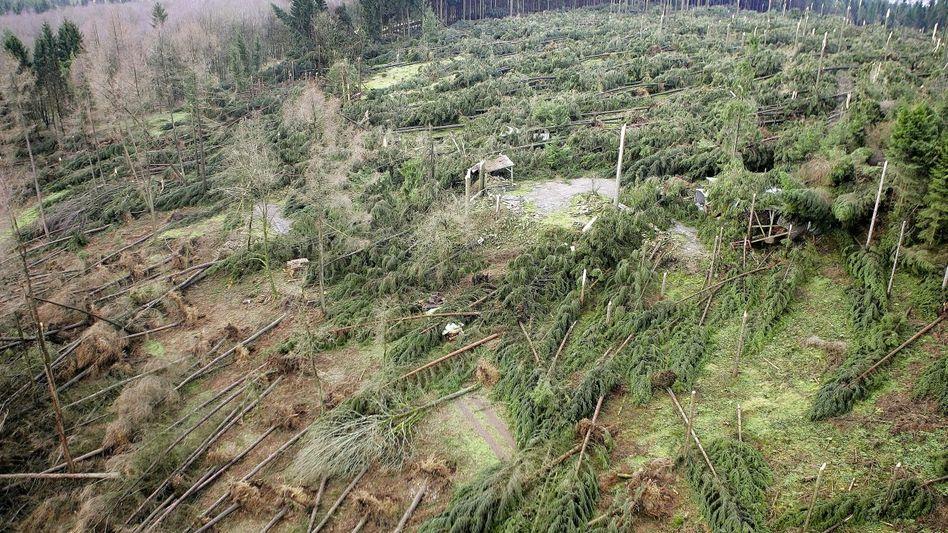 Wetterschäden durch Sturm nach dem Orkan »Kyrill« in Südwestfalen 2007