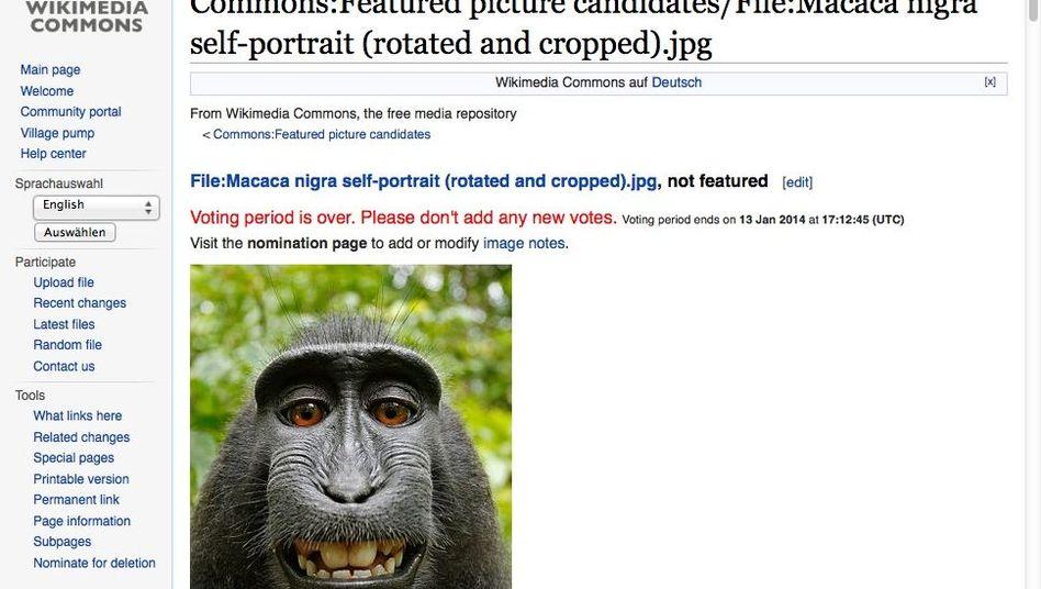 Affen-Selfie (Screenshot aus der Wikipedia): Niemand hat das Copyright an diesem Bild inne