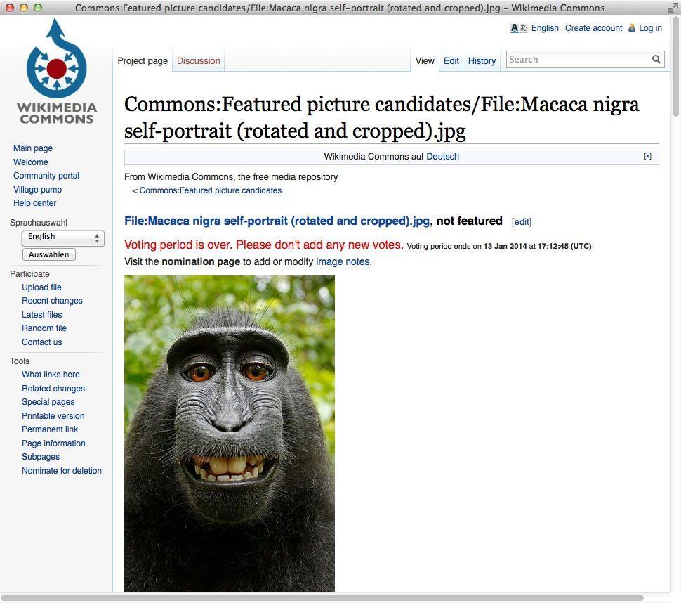 NUR ALS ZITAT Screenshot David Slater Wikipedia Affen-Selfie