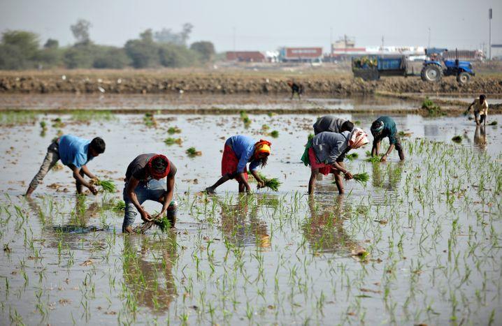 Feldarbeiter in Ahmedabad, Indien