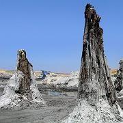 Gut gehalten: Acht Millionen alte Zypressen in Ungarn