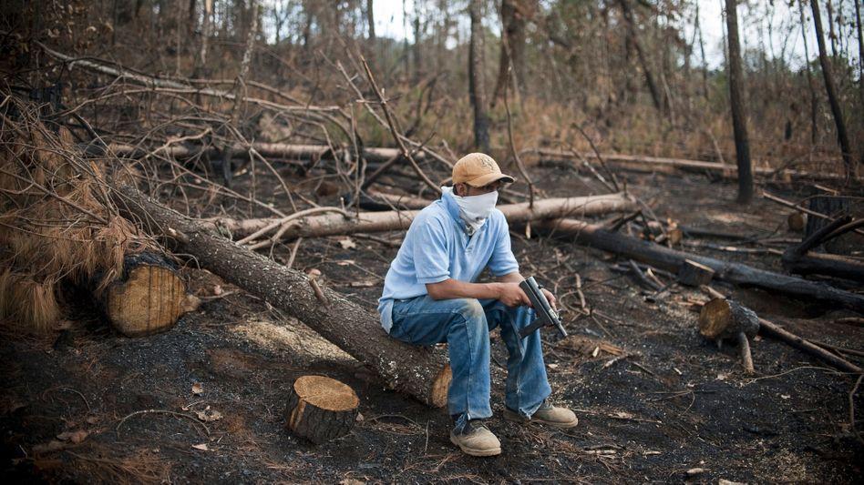 In Mexiko versuchen vielerorts Bürgerwehren, Wälder vor kriminellen Banden zu schützen – teils sind sie aber selbst von den Kriminellen unterwandert