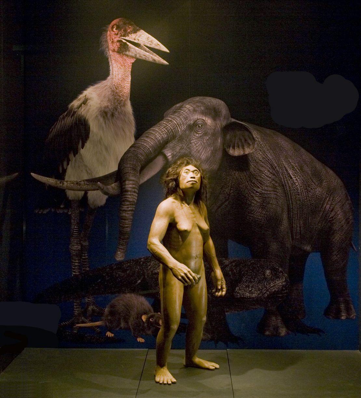 EINMALIGE VERWENDUNG Homo Floresiensis / Hirnfoschung
