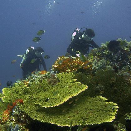 """Korallenriff in Indonesien: """"Es muss sofort entschlossen gehandelt werden"""""""