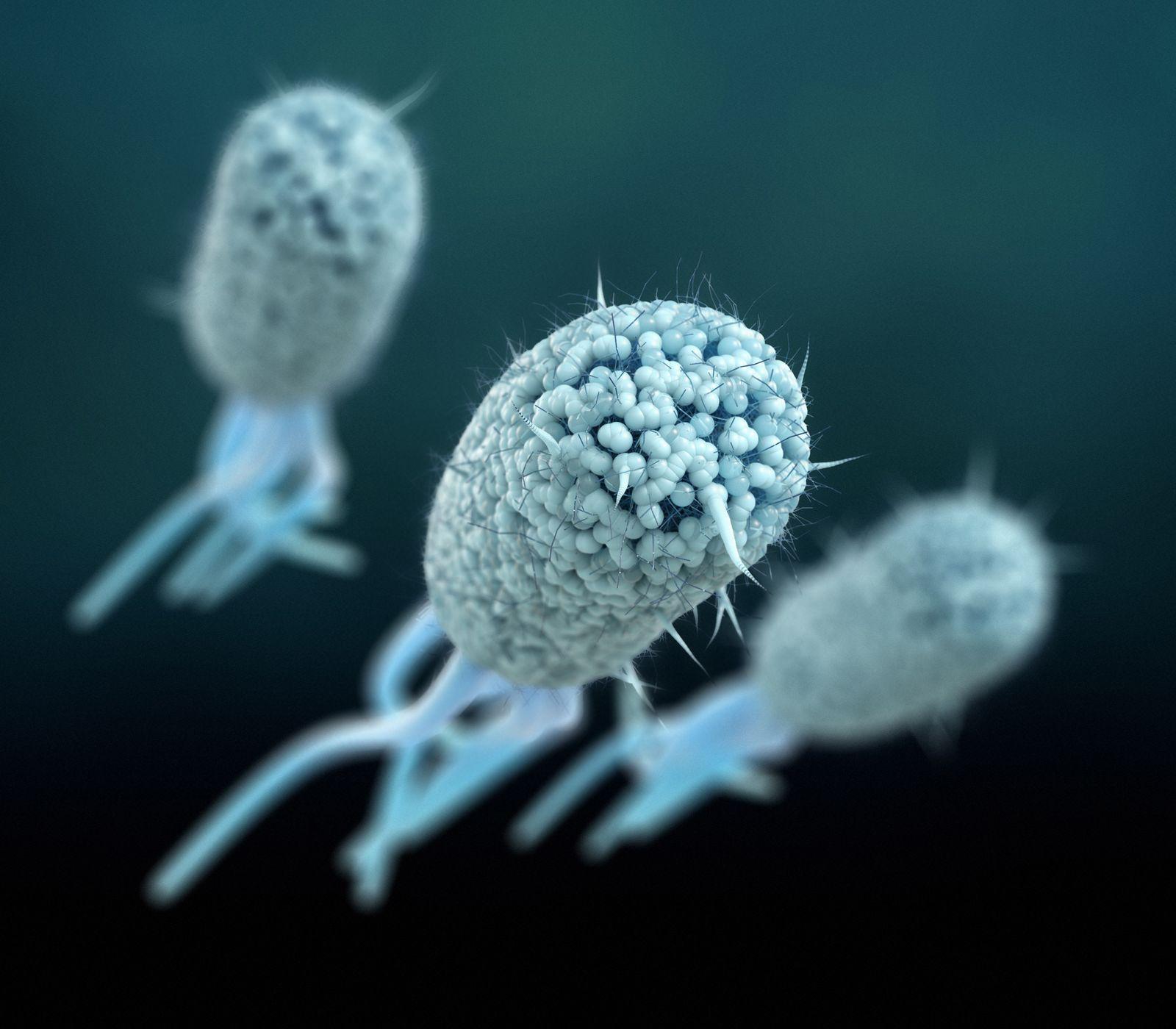 EINMALIGE VERWENDUNG / Bakterien / EXPIREN am 13.02.24