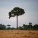 Forscher warnen vor Ökosystem-Kollaps innerhalb von Jahrzehnten