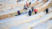 Mehr als 40.000 Erntehelfer kamen trotz Corona