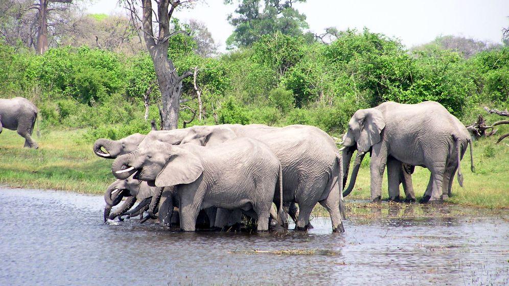 Wilderei: Keine Elefanten, keine Touristen