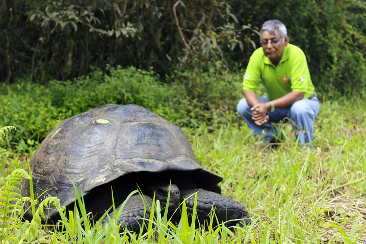 Chelonoidis-donfaustoi-Schildkröte mit ihrem Namenspaten Fausto Llerena (r.)