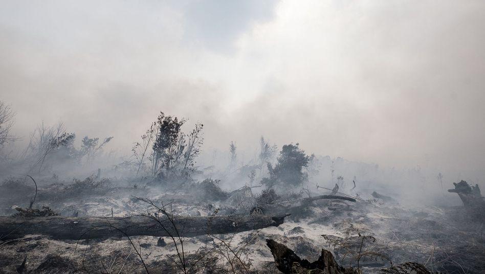 Brände im indonesischen Urwald