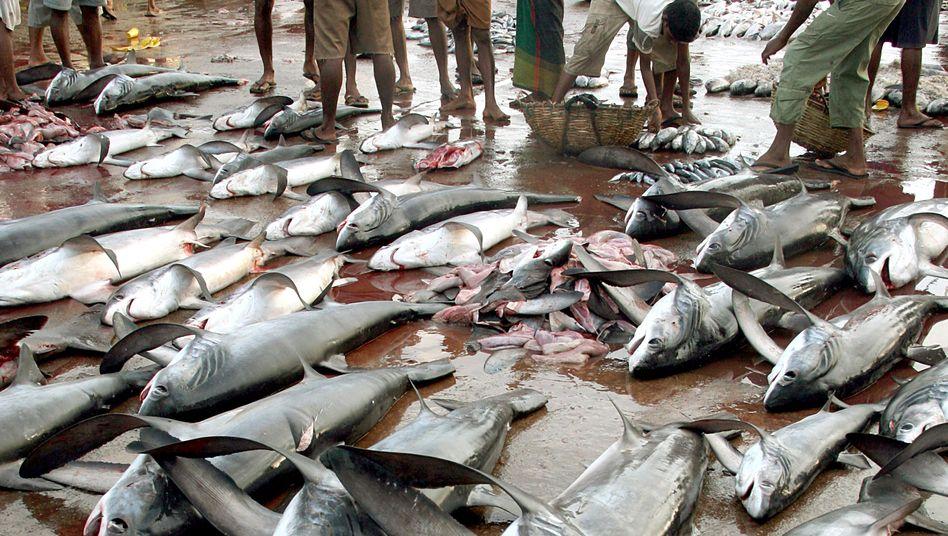 Haifang (in Sri Lanka): Brutale Fischereimethoden