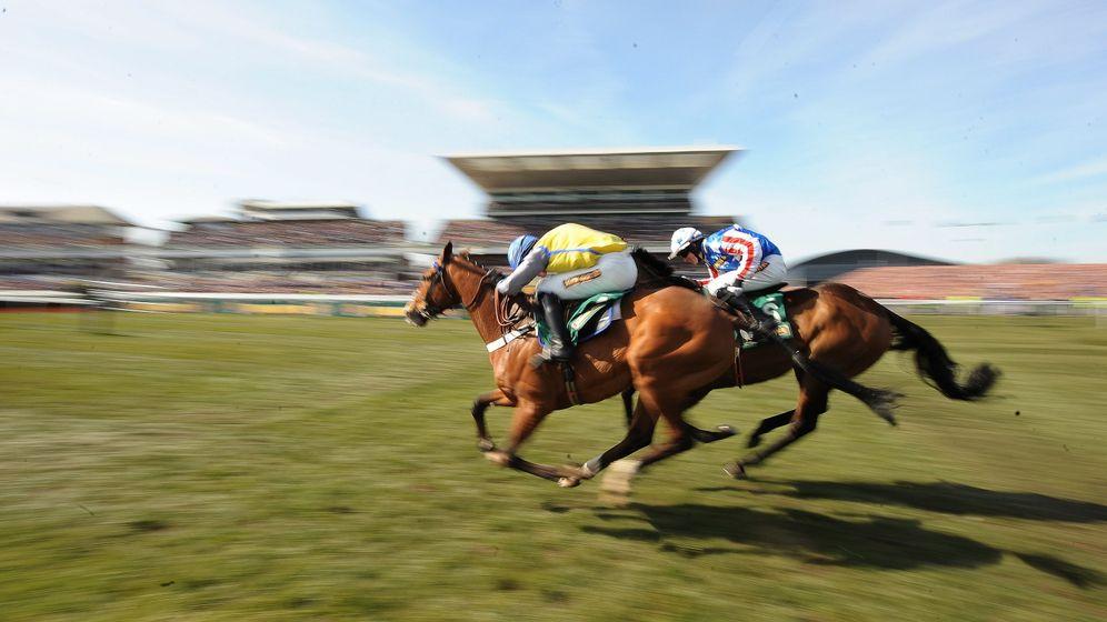 Geschwindigkeit von Rennpferden: Immer schneller