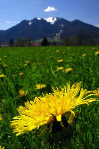 Land Art: Tiefer Kamerastandpunkt und Details im Vordergrund peppen Landschaften auf.