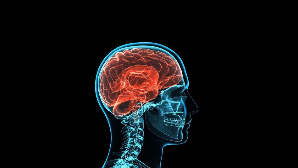Gehirn (Grafik): Per Gedanken direkt einen Cursor steuern - das ist schon möglich