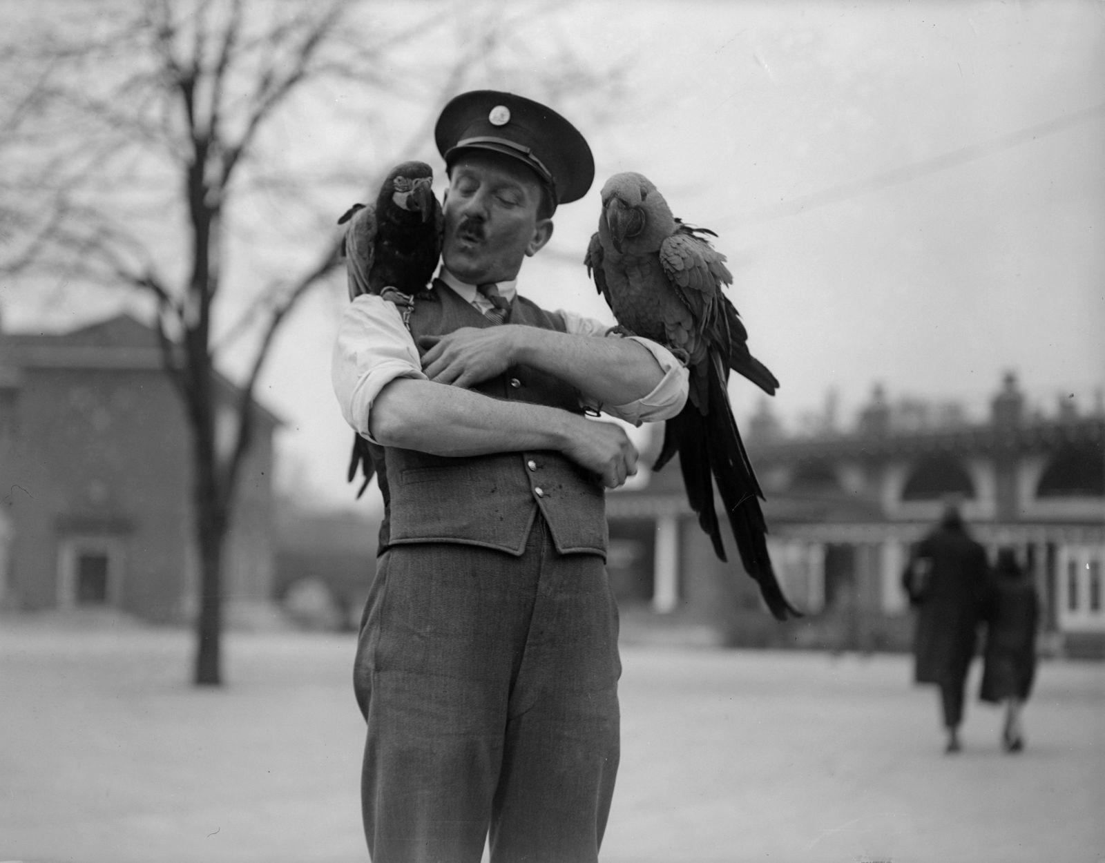 Parrot Keeper