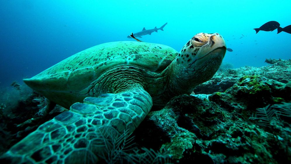Turbulenter Pazifik: Das Treiben der Meerestiere
