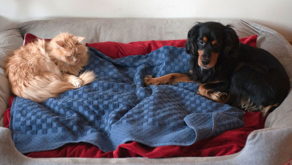 Katze und Hund: Entscheidung über Haustierhaltung vom Bundesgerichtshof