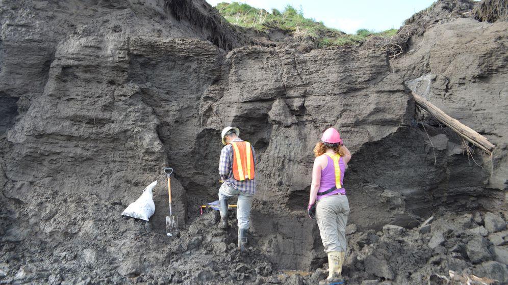 Paläontologie: Welpenfell, 50.000 Jahre alt