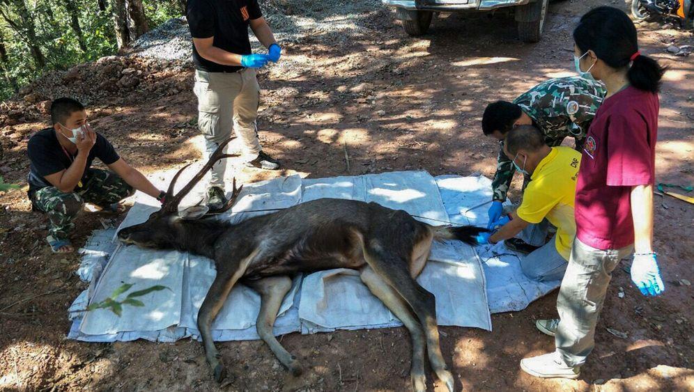 Toter Hirsch in Thailand: Plastik im Bauch