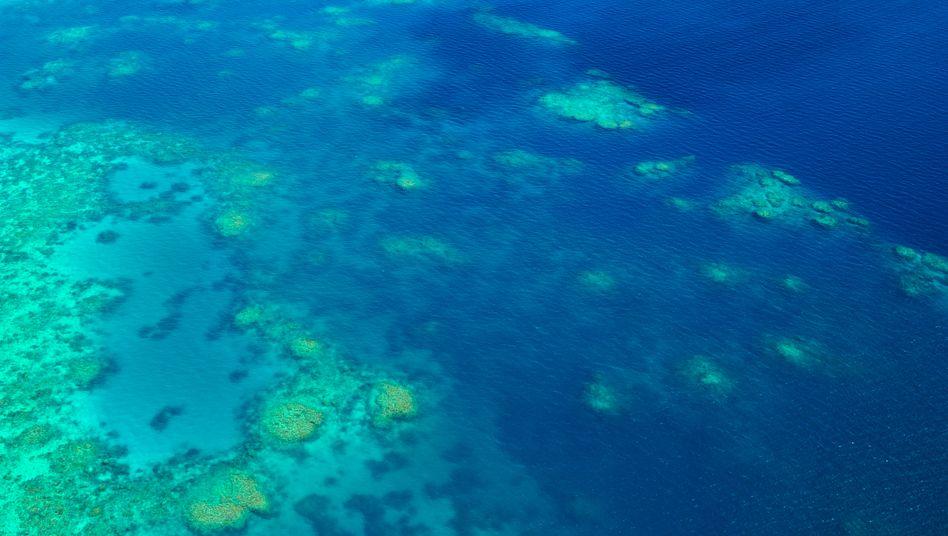 Das Unglück ereignete sich im bei Touristen beliebten Great Barrier Reef