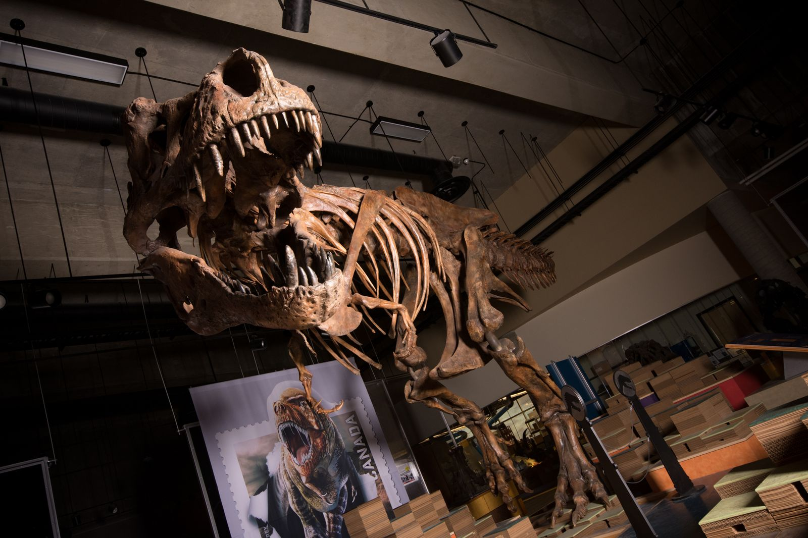 EINMALIGE VERWENDUNG Tyrannosaurus Rex