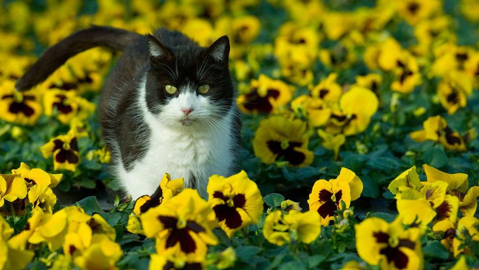 Katze in Blumenfeld: Wer Katzenblogs liest, sieht auf anderen Seiten Tierfutterwerbung