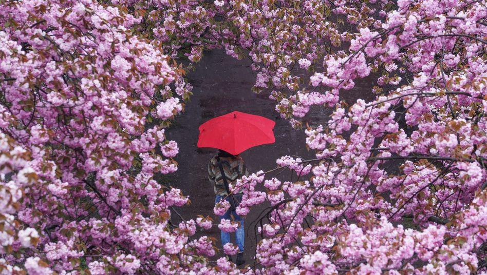 Frühling in Berlin (am 7. Mai)