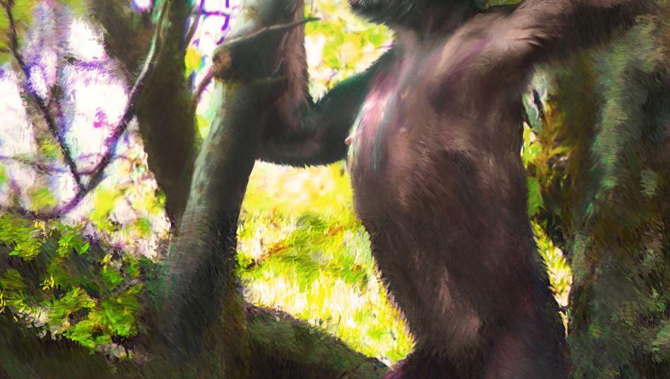 Primat Danuvius guggenmosi: Wir affen das.