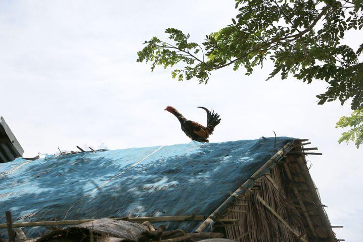 Ein einziges Huhn ist dem Bauern geblieben