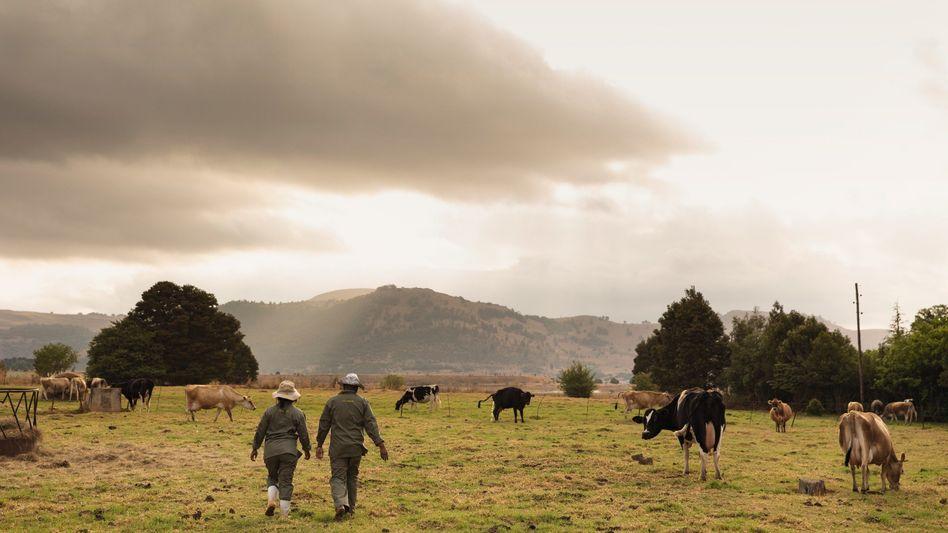 Viehzüchter in Südafrika: Fiasko im Paradies
