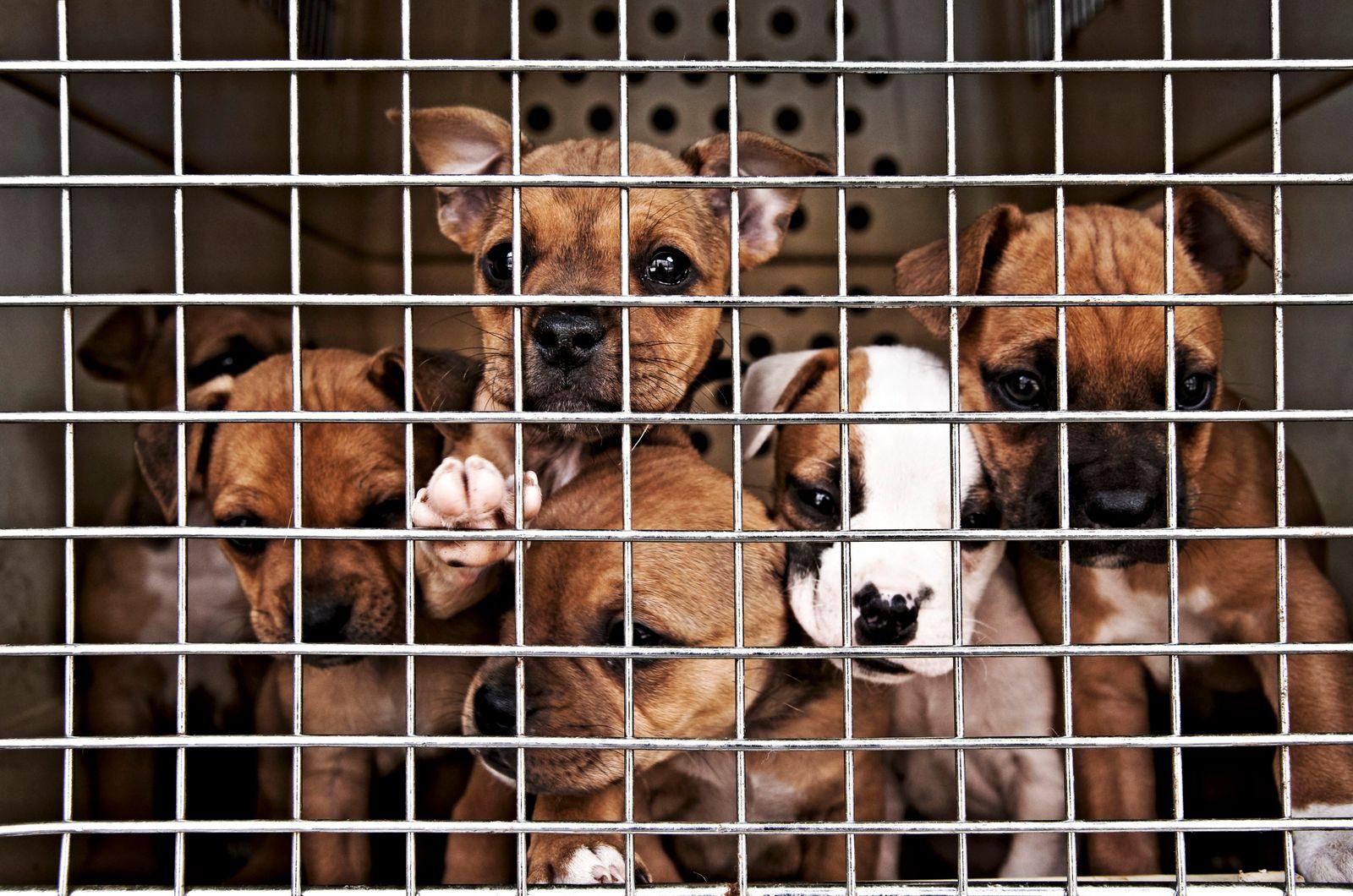 Welpen hinter Gittern