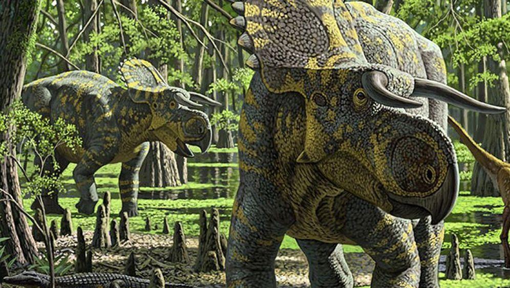 Neuer Saurier: Triceratops spektakulärer Cousin