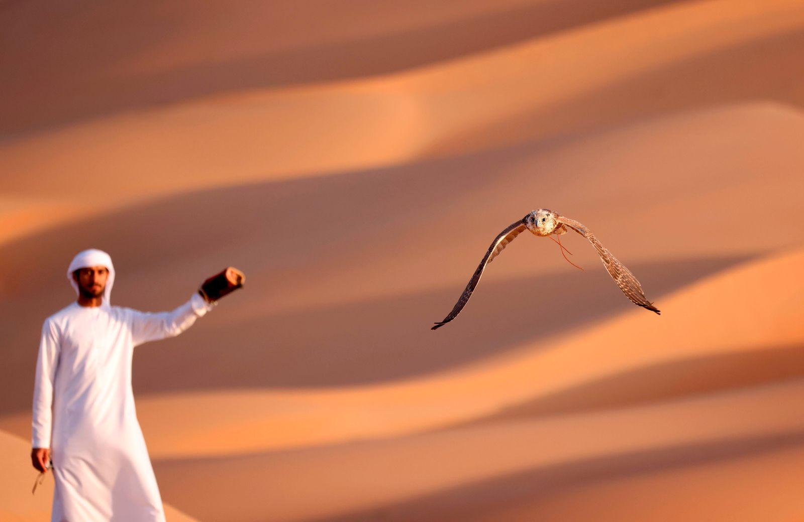 TOPSHOT-UAE-CULTURE-ANIMAL-FALCONRY