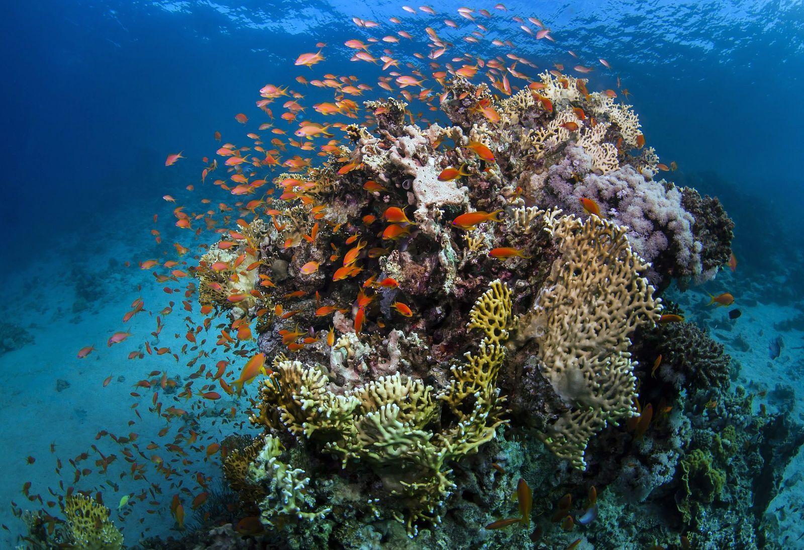 EINMALIGE VERWENDUNG Korallenriff