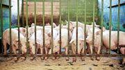 »Unser Fleisch wird teurer werden, das muss man aussprechen«