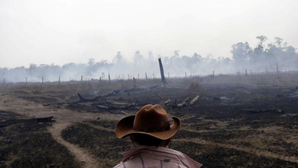 Abgebrannter Regenwald am Amazonas