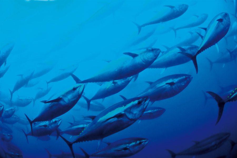 Fische / Überfischung