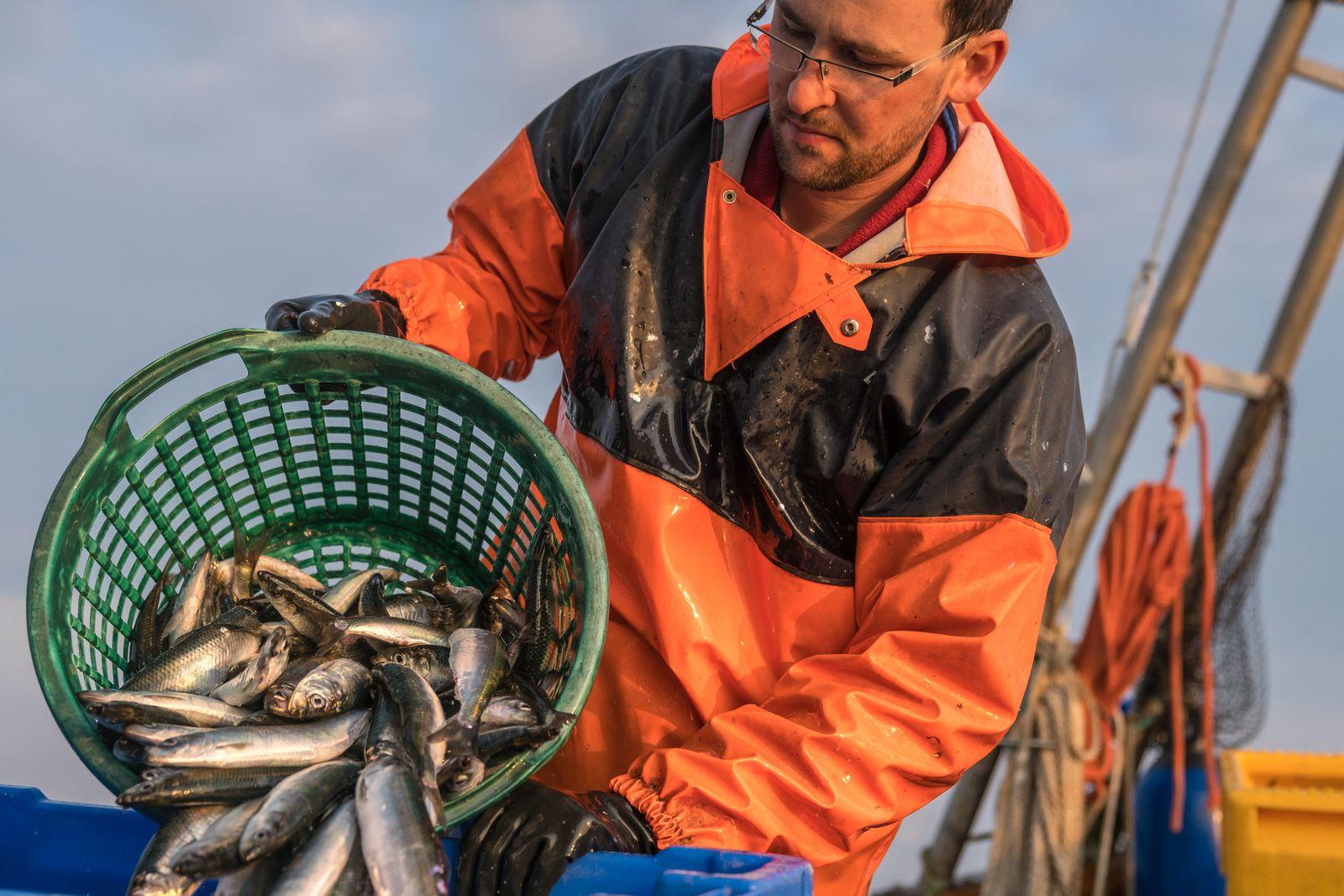 Fischer Peter Dietze/ Fangquoten/ Ostsee