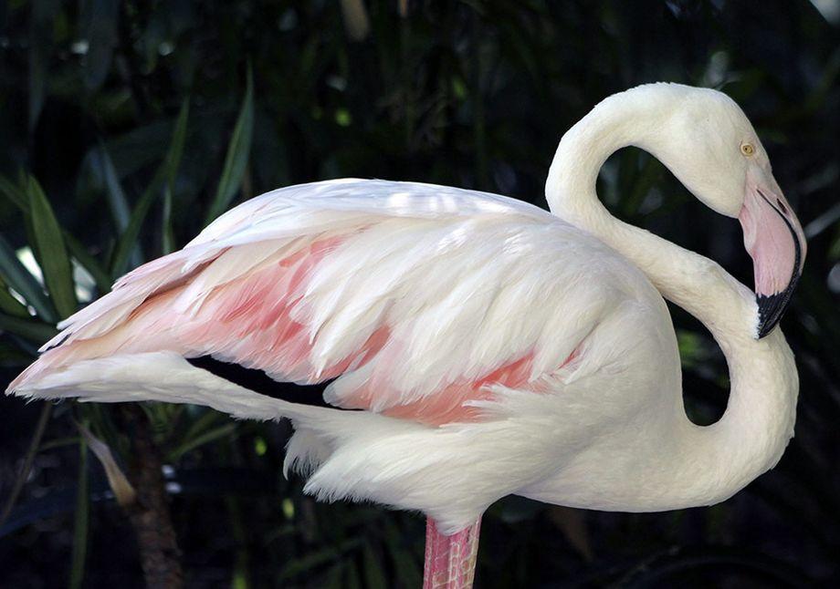 ältester Zoo Der Welt