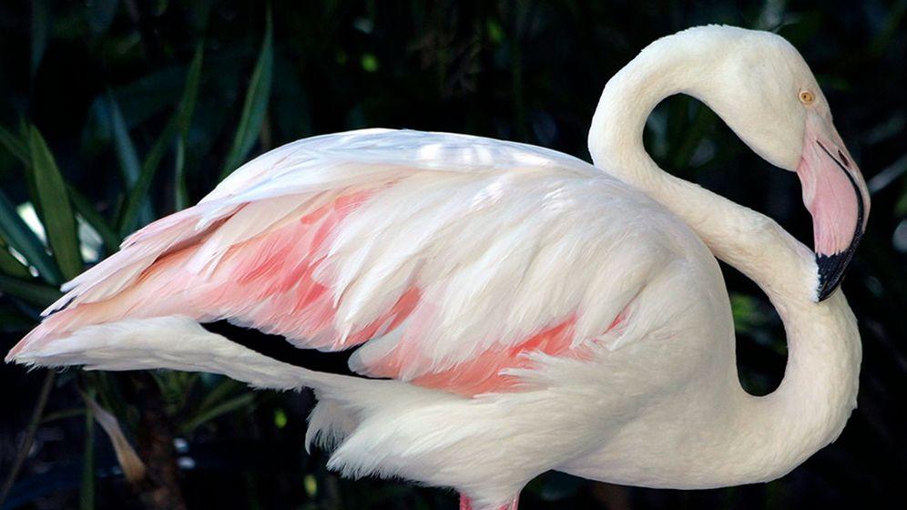 Ältester Flamingo der Welt: Tod mit 83 Jahren
